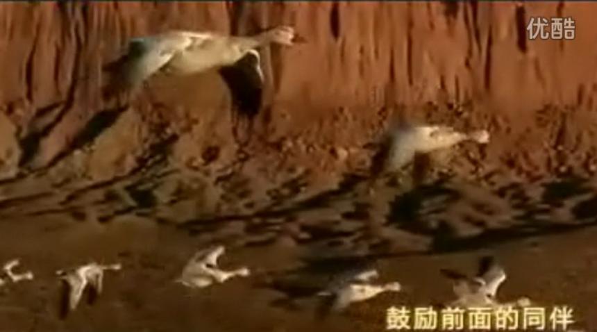 海特年会——雁阵文化
